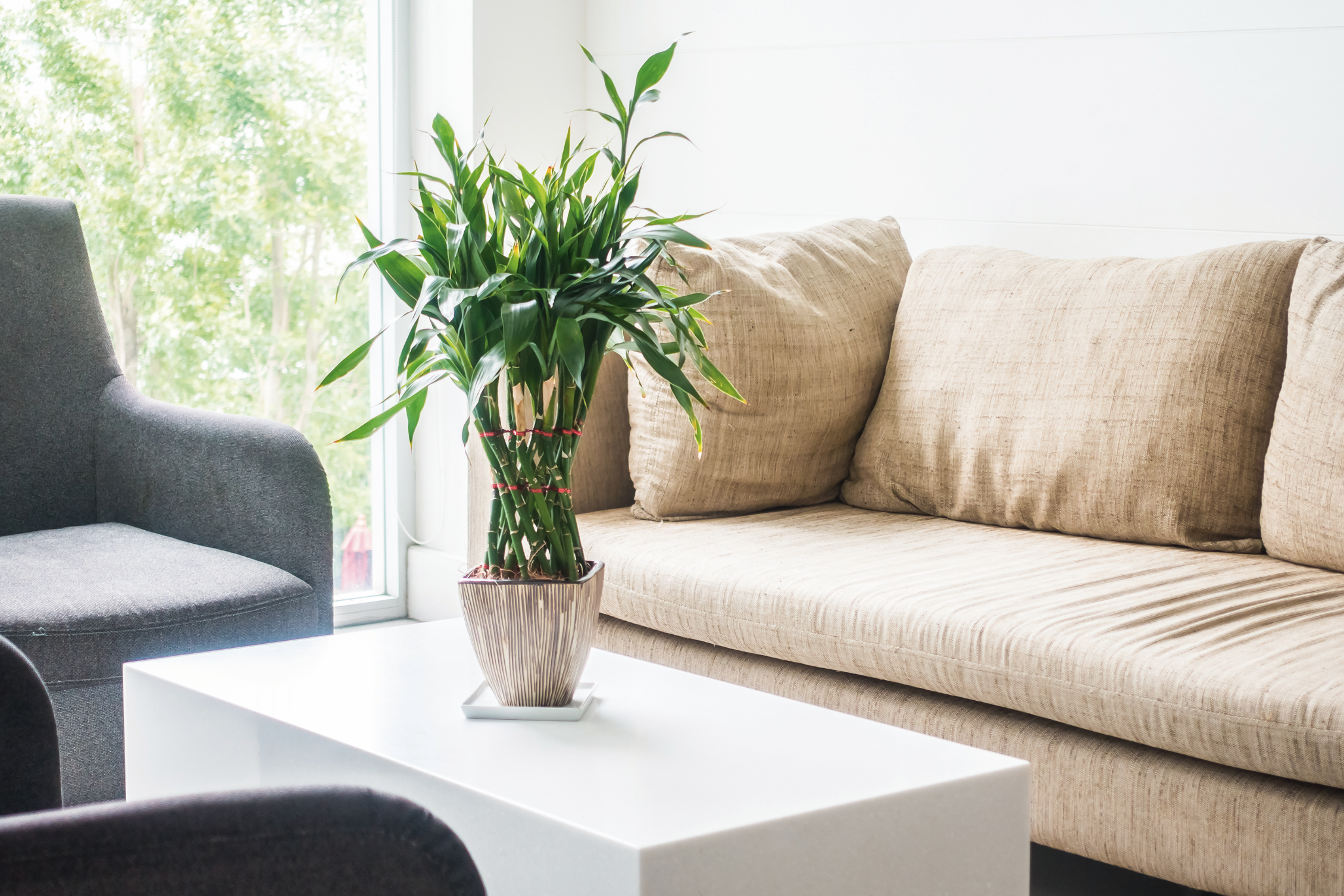 plantas interiores espacios maria izaguirre