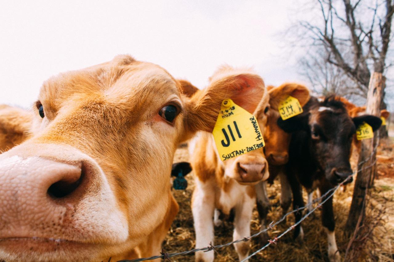 impacto ecologico veganismo